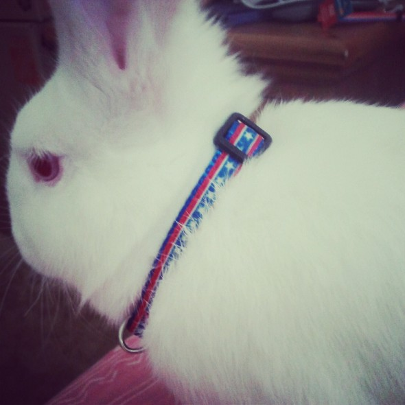 Even the srat bunny knows about 'Merica. TSM.